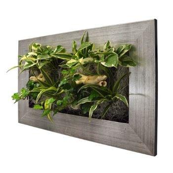 vegetation murale - Beaux Cadeaux
